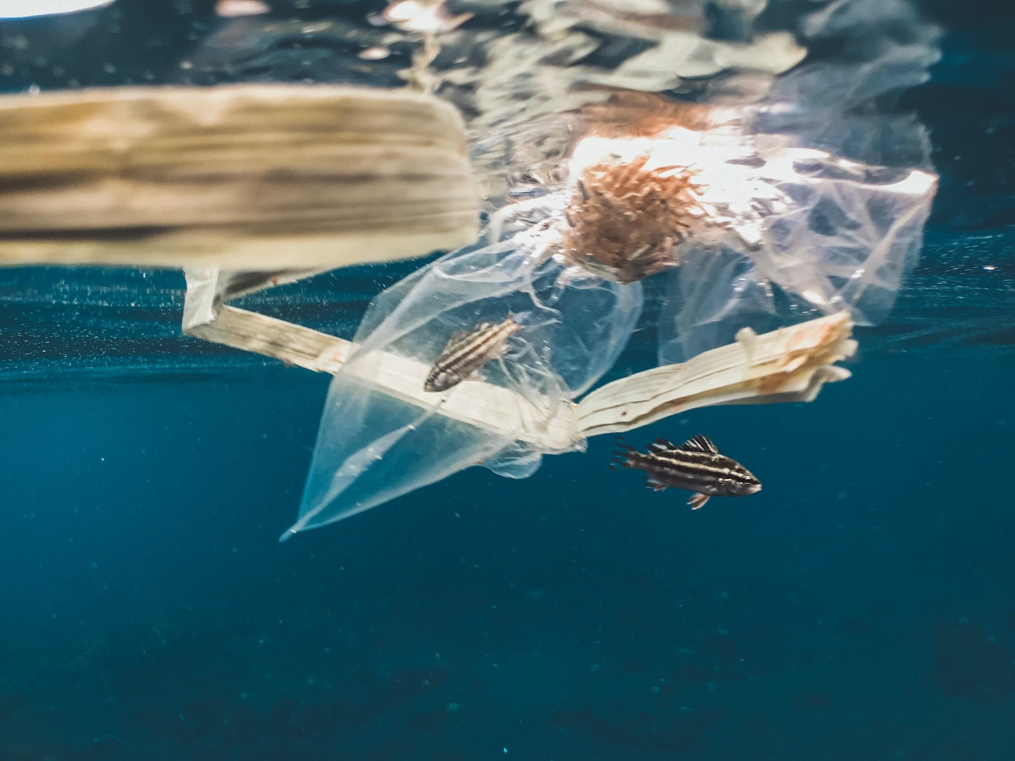 🌊 Plastfiber i haven visar sig vara till stor del naturliga fibrer