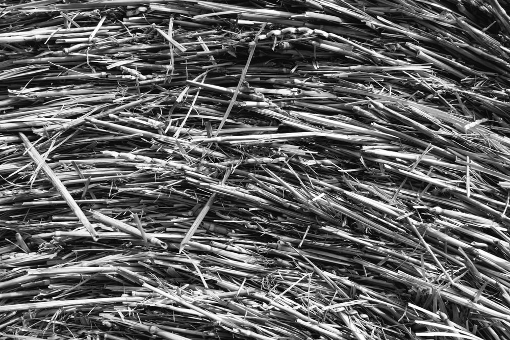 brown dried grass in grayscale photography