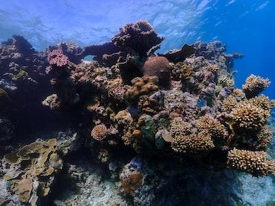 brown coral reef under water great barrier reef teams background