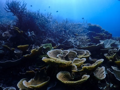 green coral reef under water great barrier reef zoom background