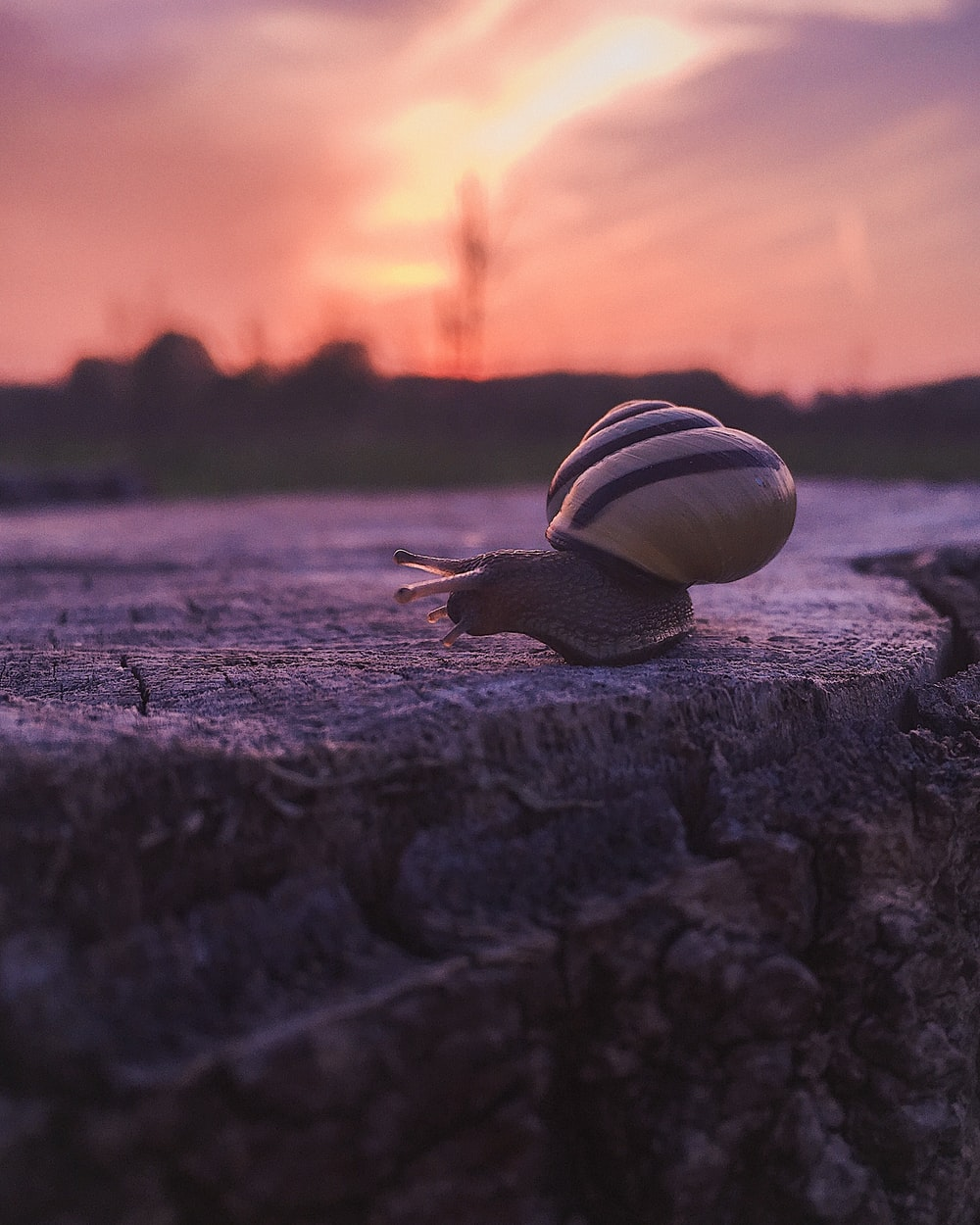 white and brown snail on brown wooden surface during sunset