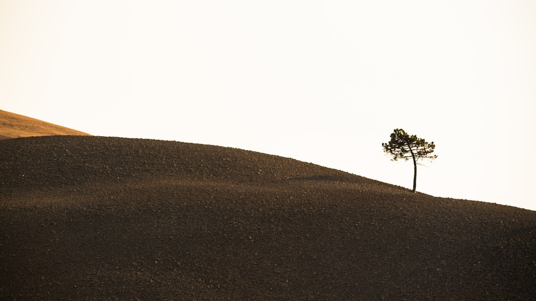 Single Tree On A Brown Hill - unsplash