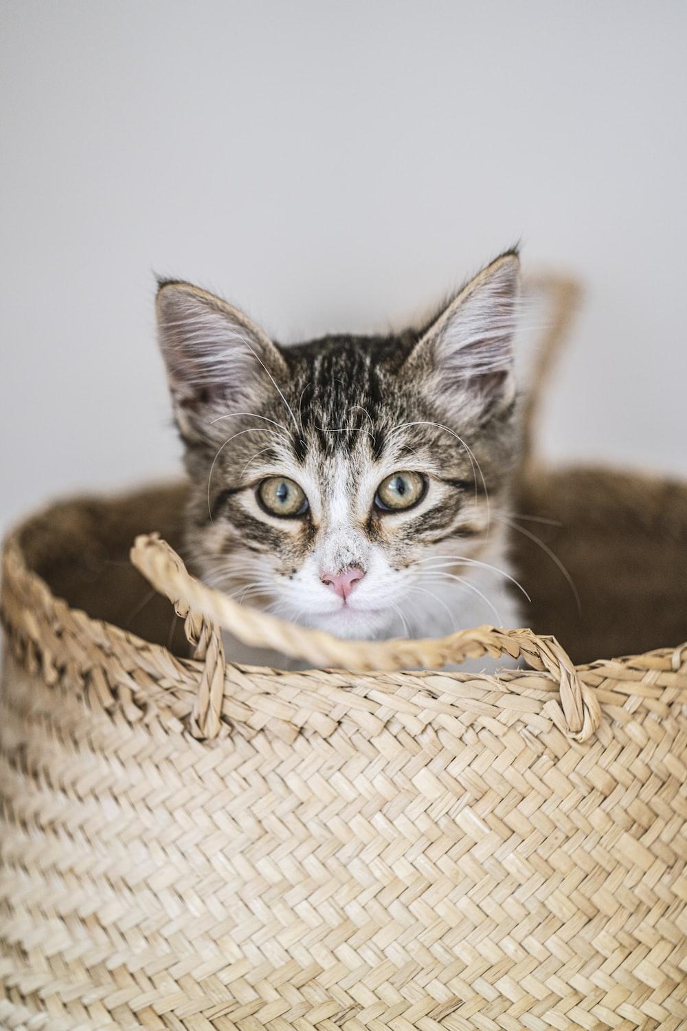 brown tabby cat in brown woven basket
