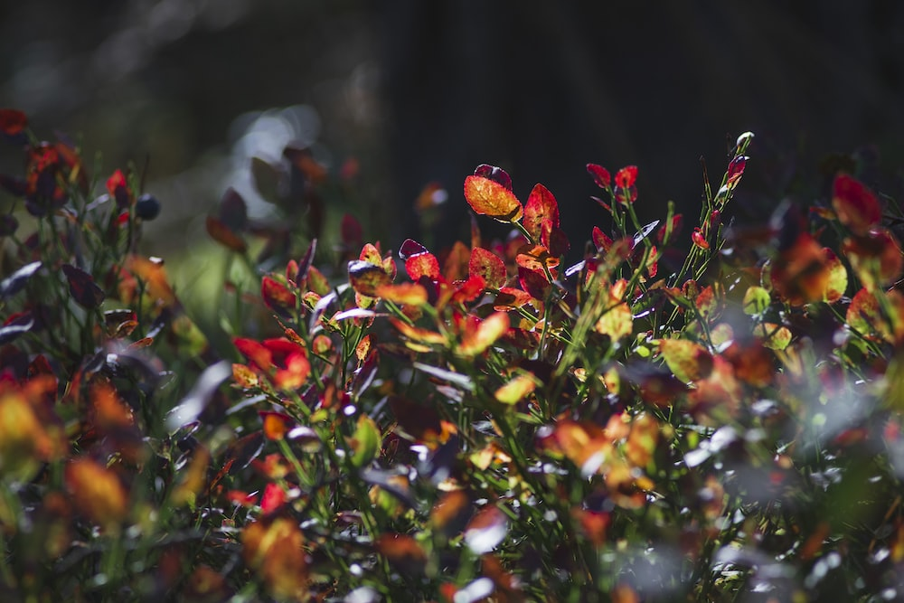 red and yellow flowers in tilt shift lens