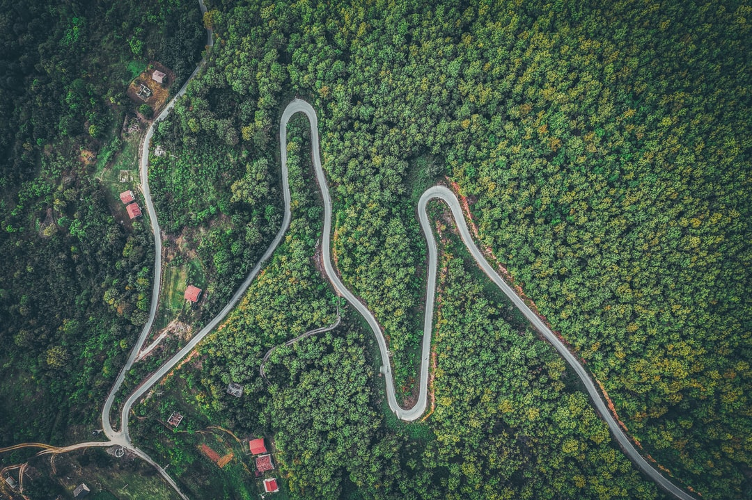 Aerial View of Green Trees and Road - unsplash