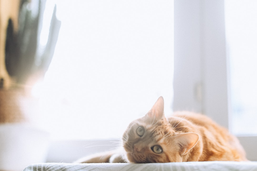 Orange Tabby Cat Lying On White Textile - unsplash