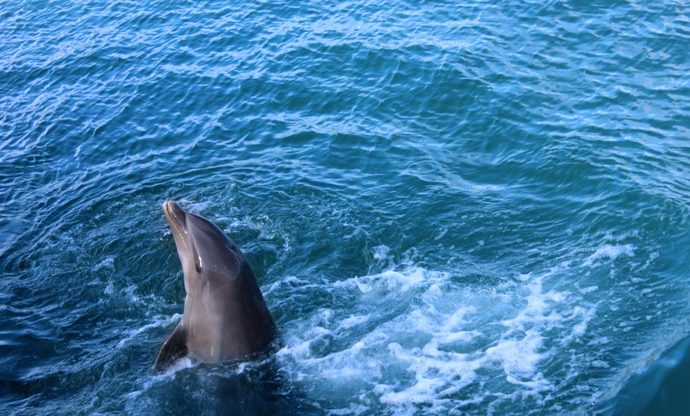 black dolphin in body of water during daytime