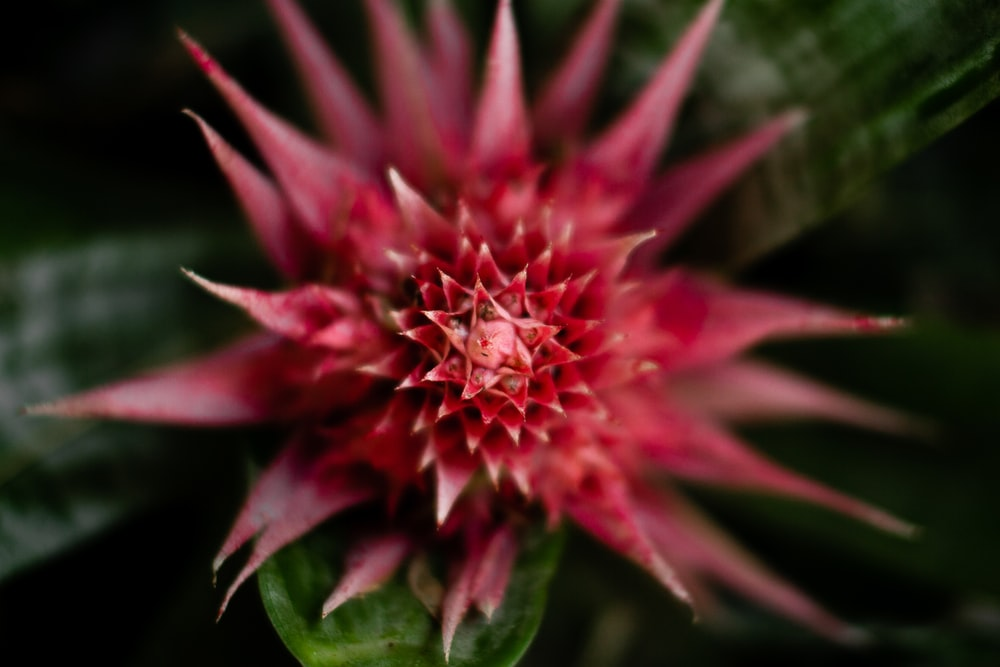 pink and green flower in macro lens