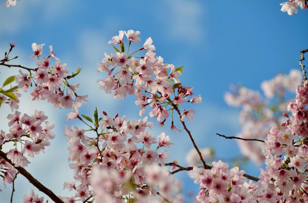 900 Spring Background Images Download Hd Backgrounds On Unsplash