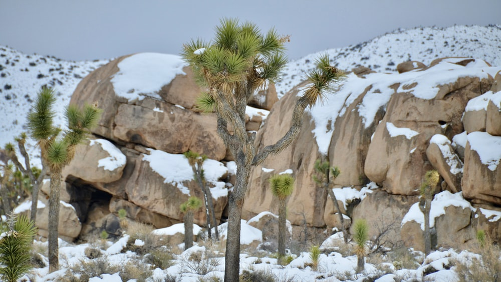 green palm tree on brown rock formation during daytime