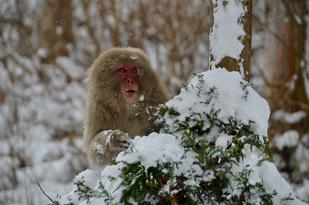 brown monkey on snow covered ground during daytime