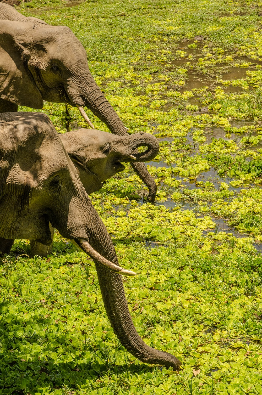 grey elephant on green grass during daytime