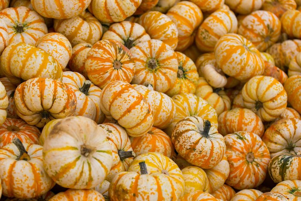 orange and white pumpkins on ground