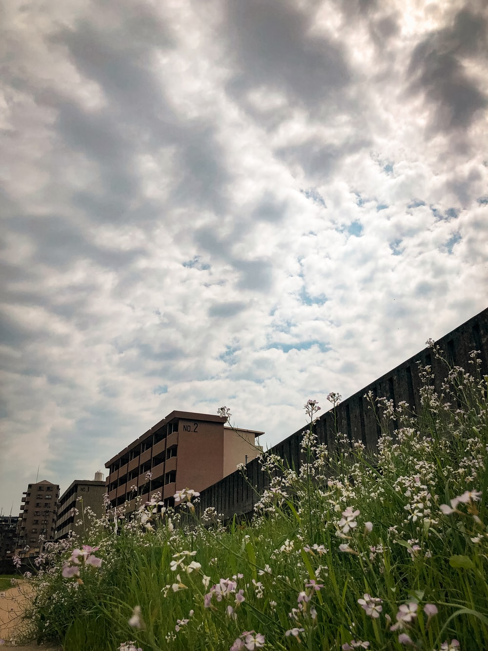 white flowers under cloudy sky during daytime