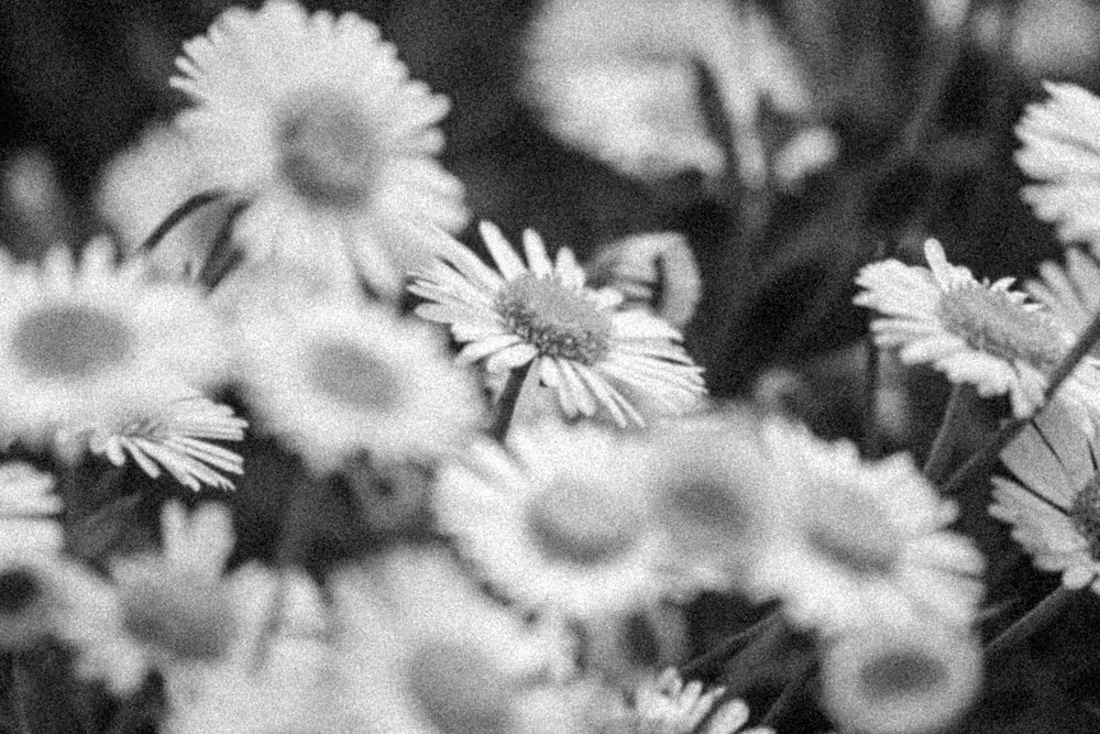 greyscale photo of white flowers