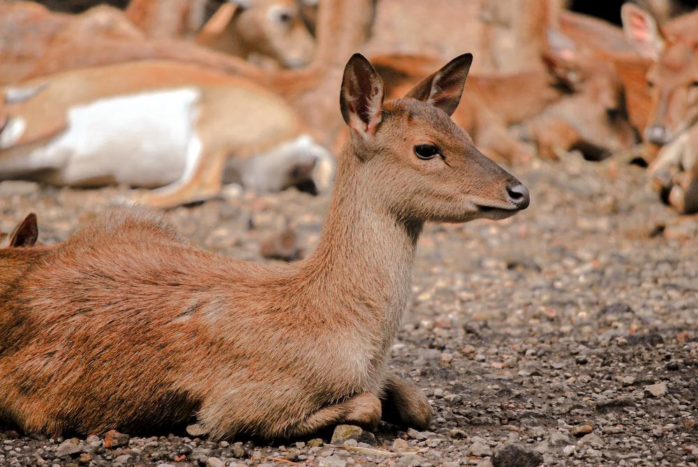 brown deer on gray ground during daytime