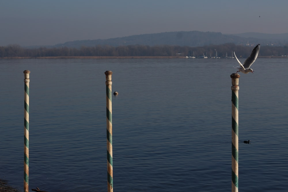 blue and white wooden post on sea water during daytime