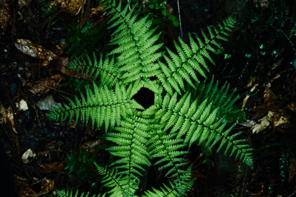 green fern plant on ground