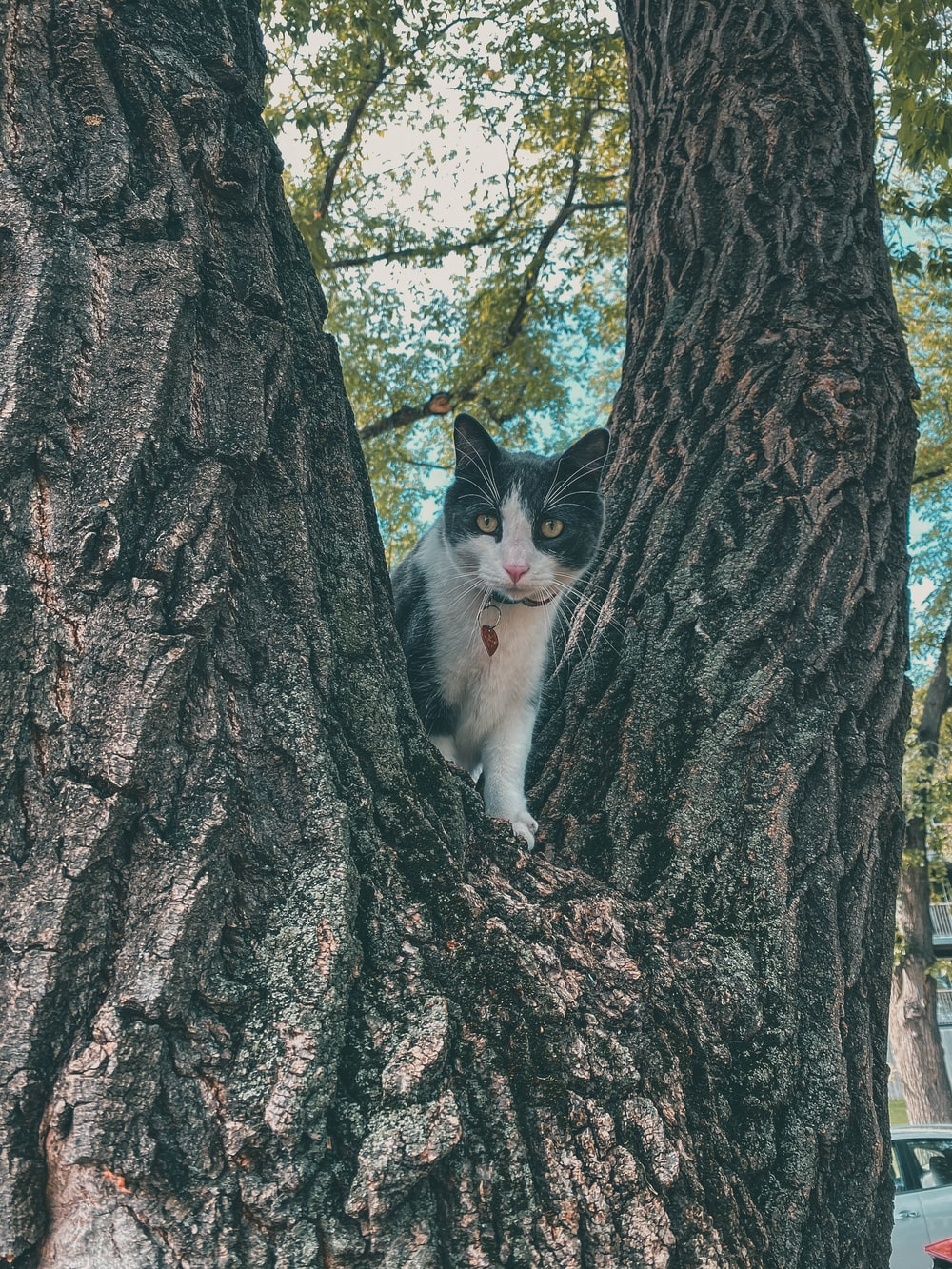 white and black cat on tree