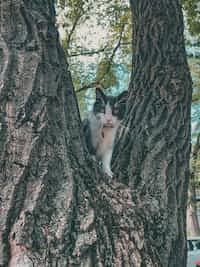 Pet Contest  commaful stories