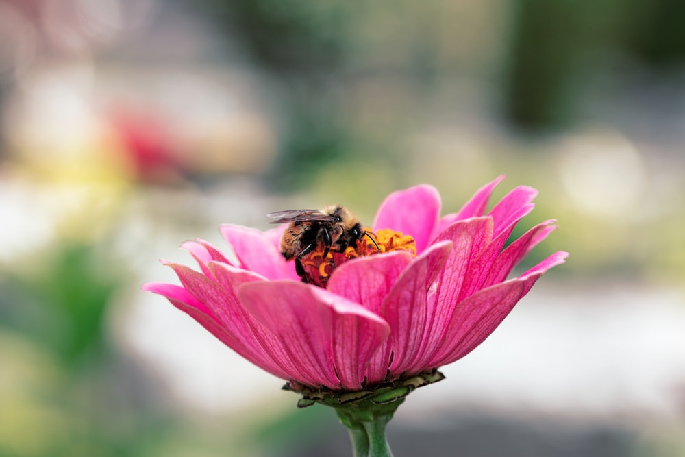 honeybee perched on pink flower in close up photography during daytime