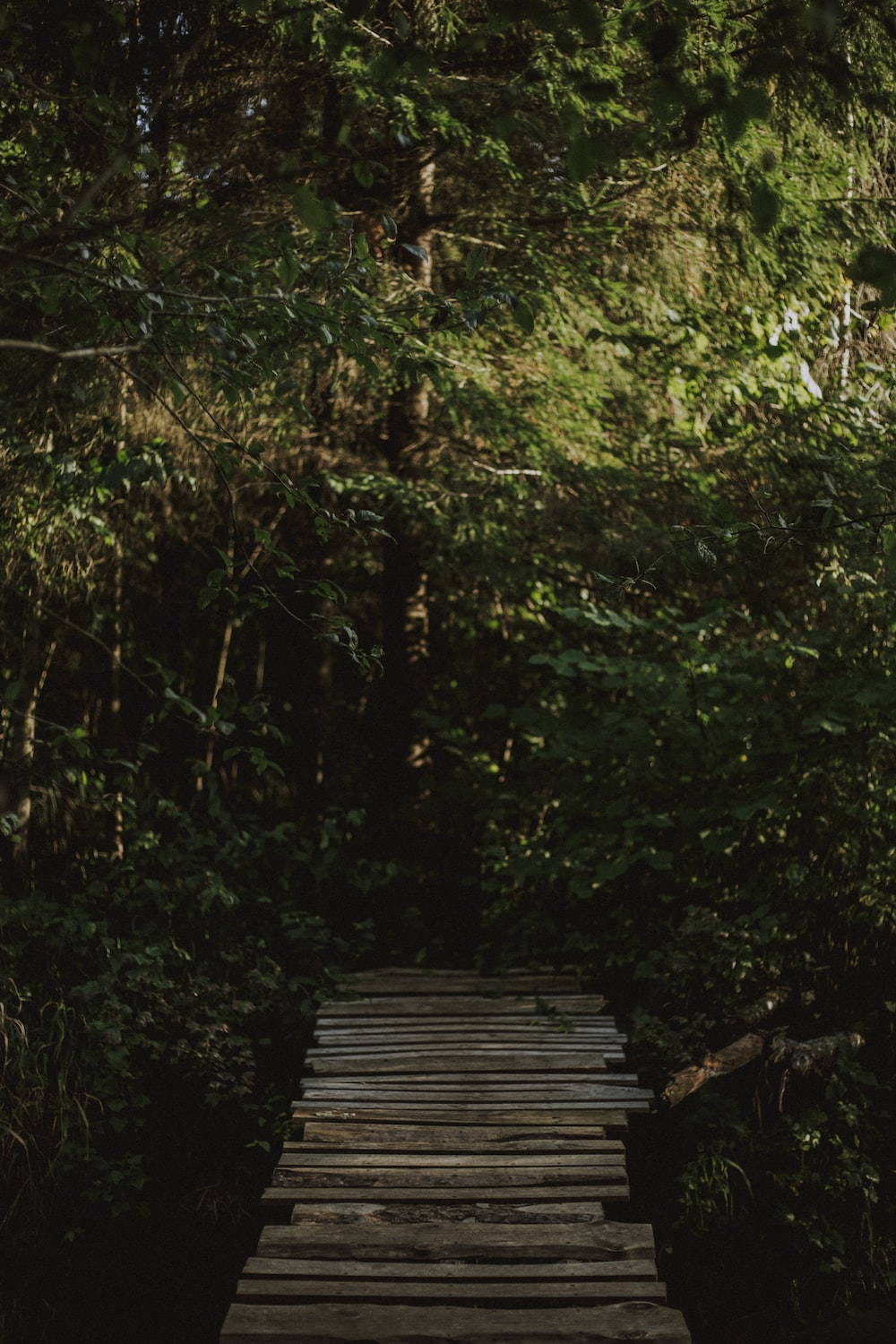 brown wooden dock in the middle of the forest