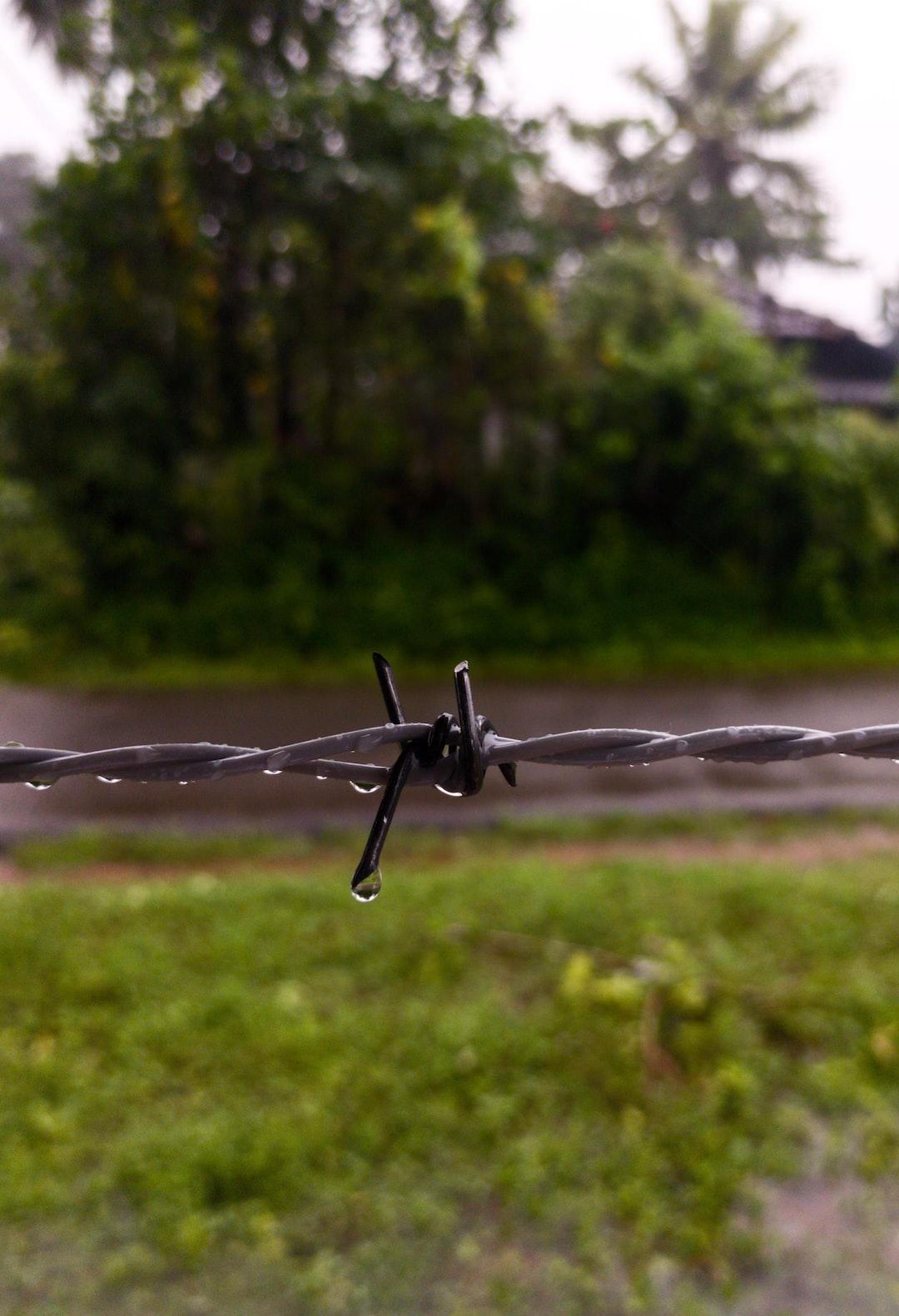 Unsplash photos by Vishwasa Navada K