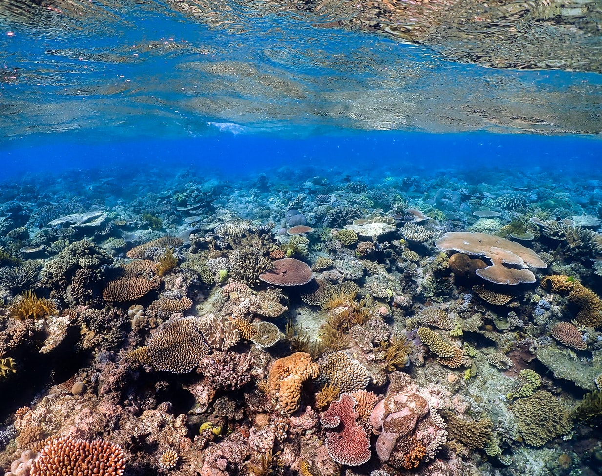 Australian Government Rejects Proposed Great Barrier Reef Protections from UN
