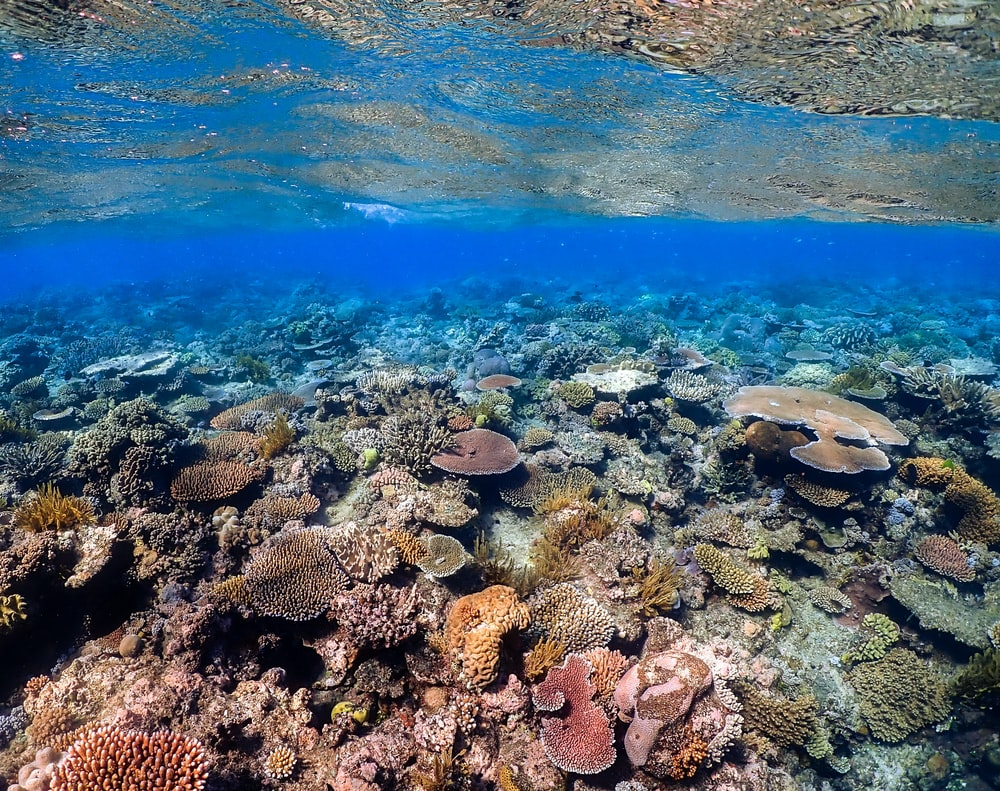green coral reef under water