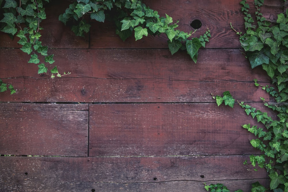 green plant on brown wooden fence