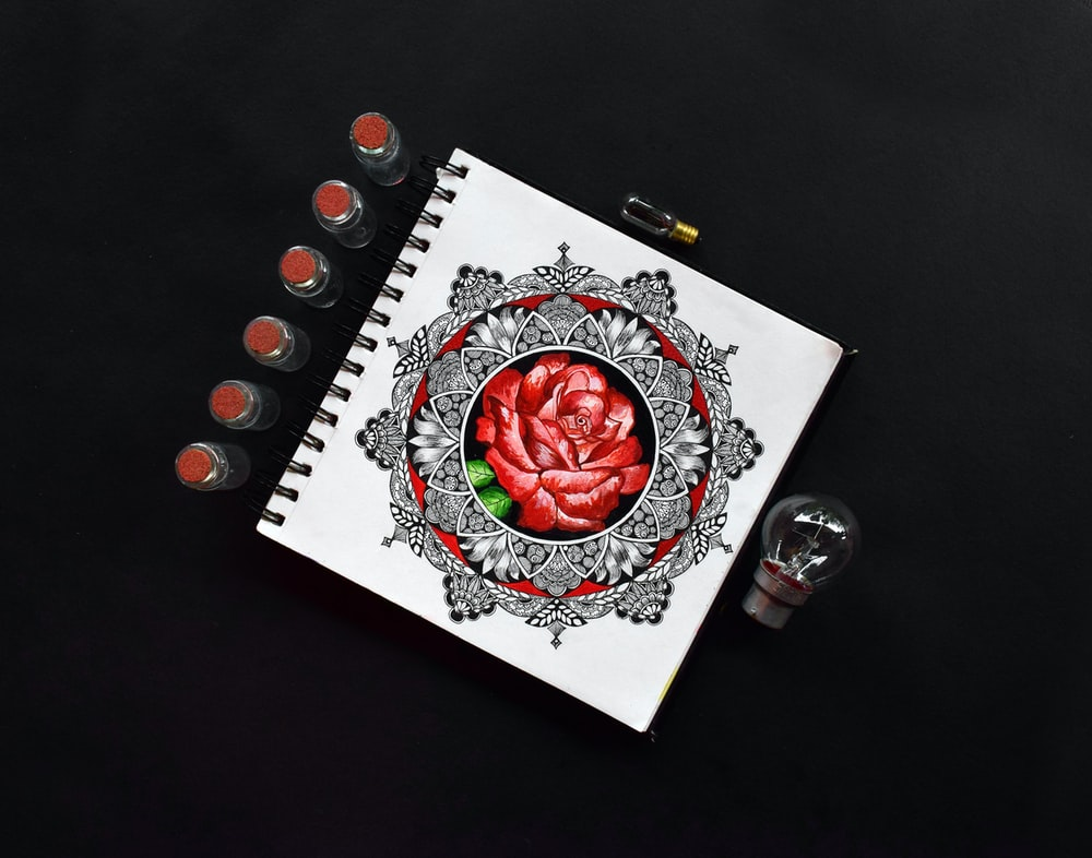 red rose on white paper