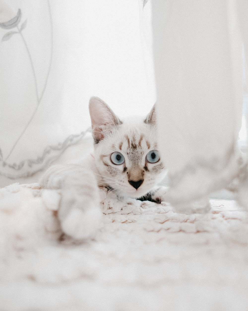 white and brown cat on white textile
