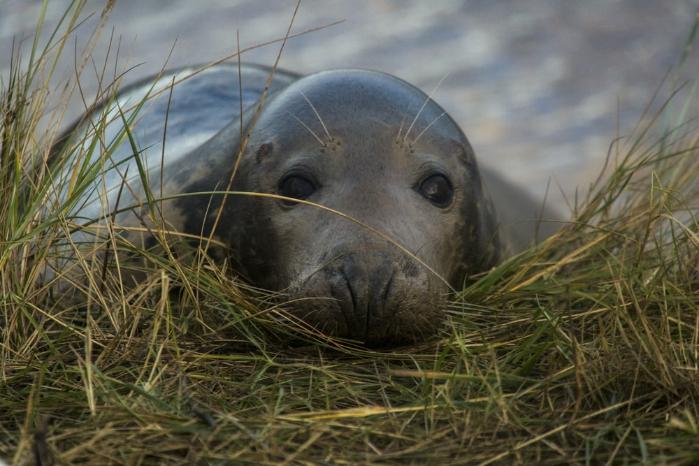 sea lion on green grass during daytime