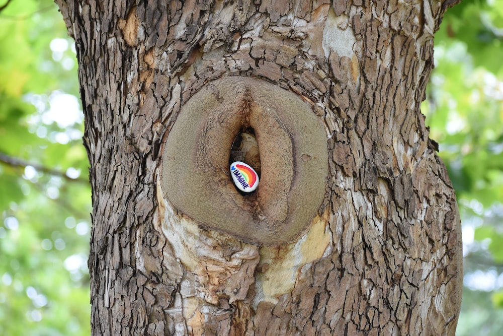 brown tree with hole during daytime