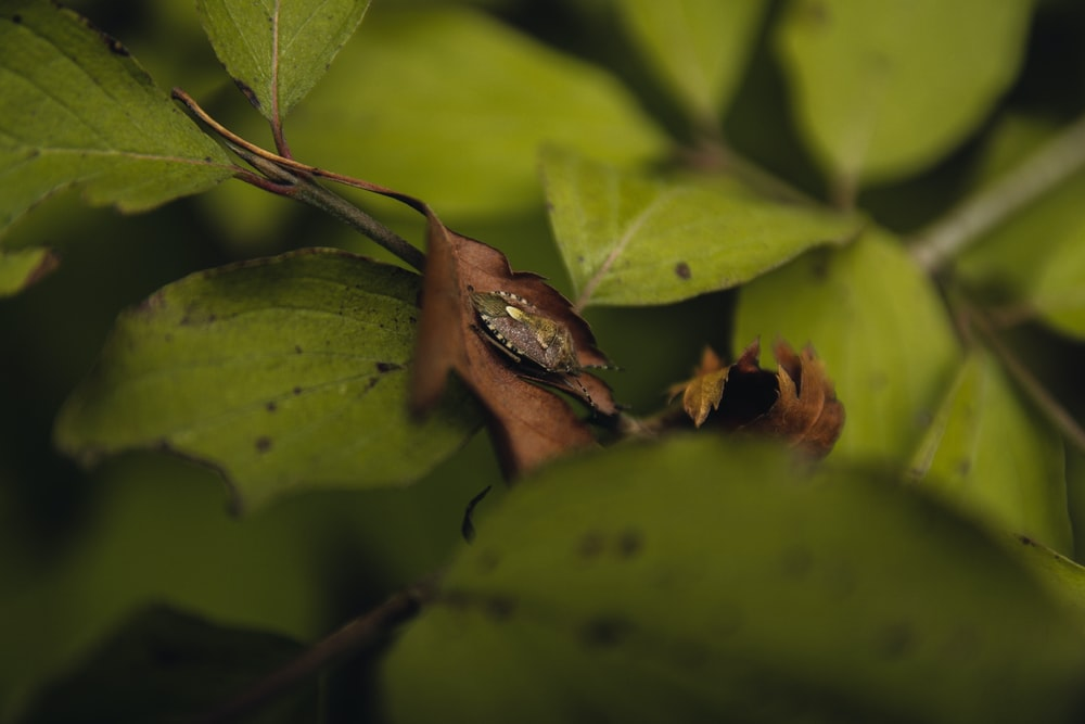 brown frog on green leaves