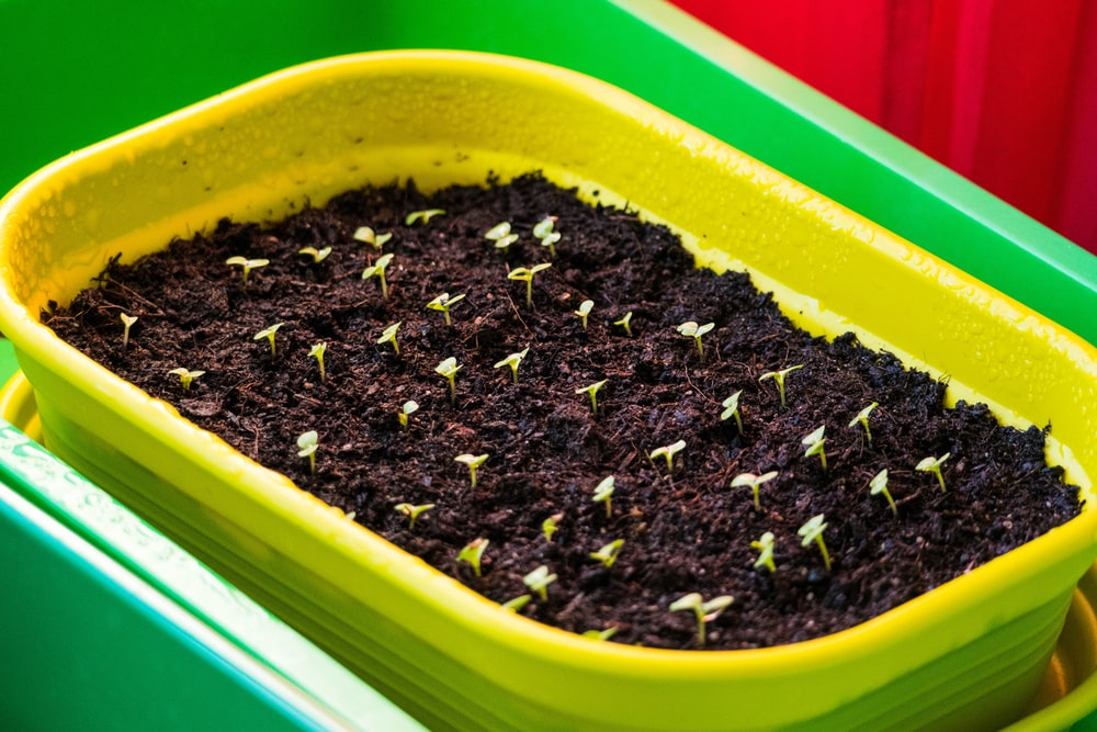 green plastic container with black soil