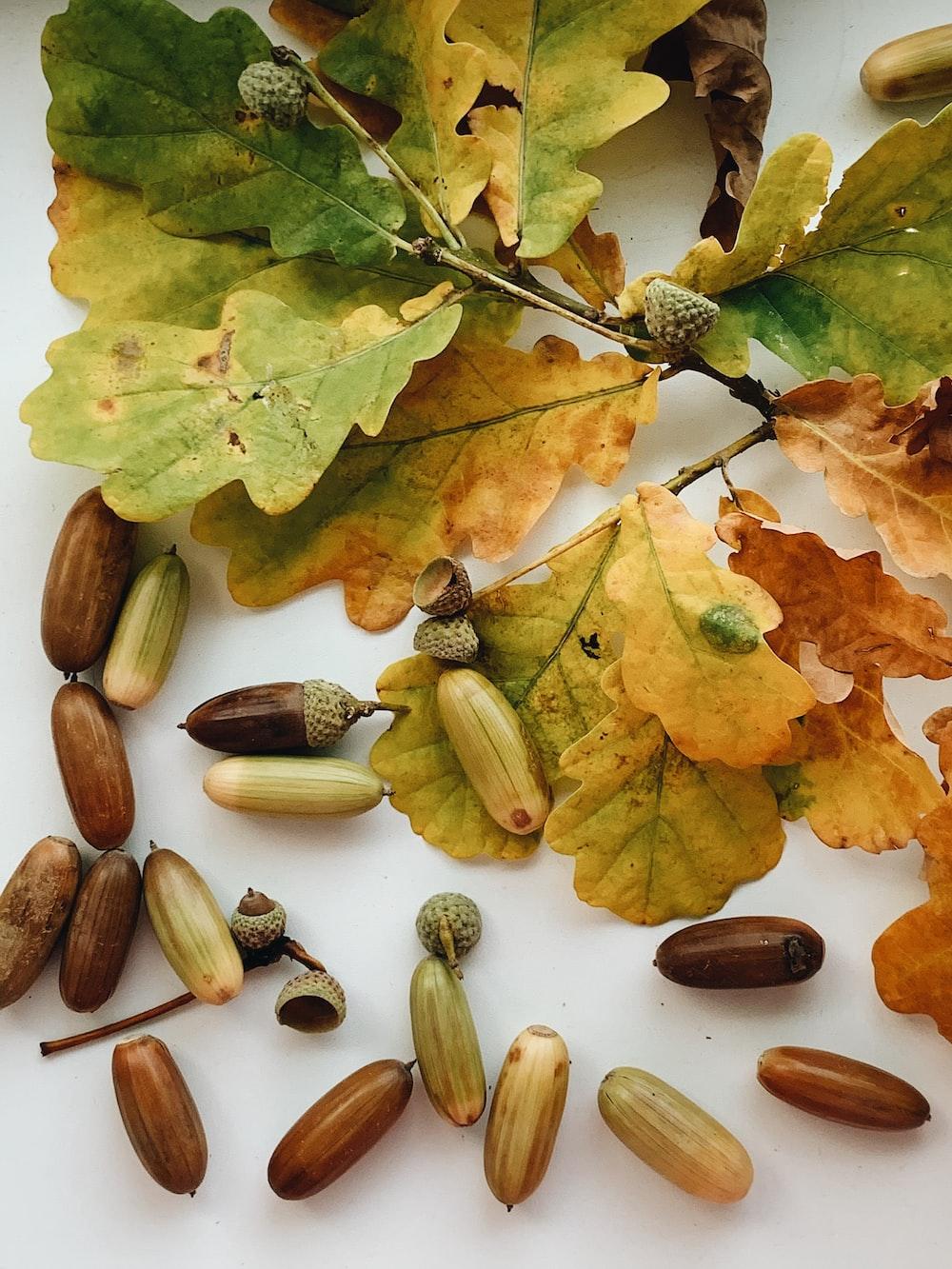 green leaves on brown dried leaves