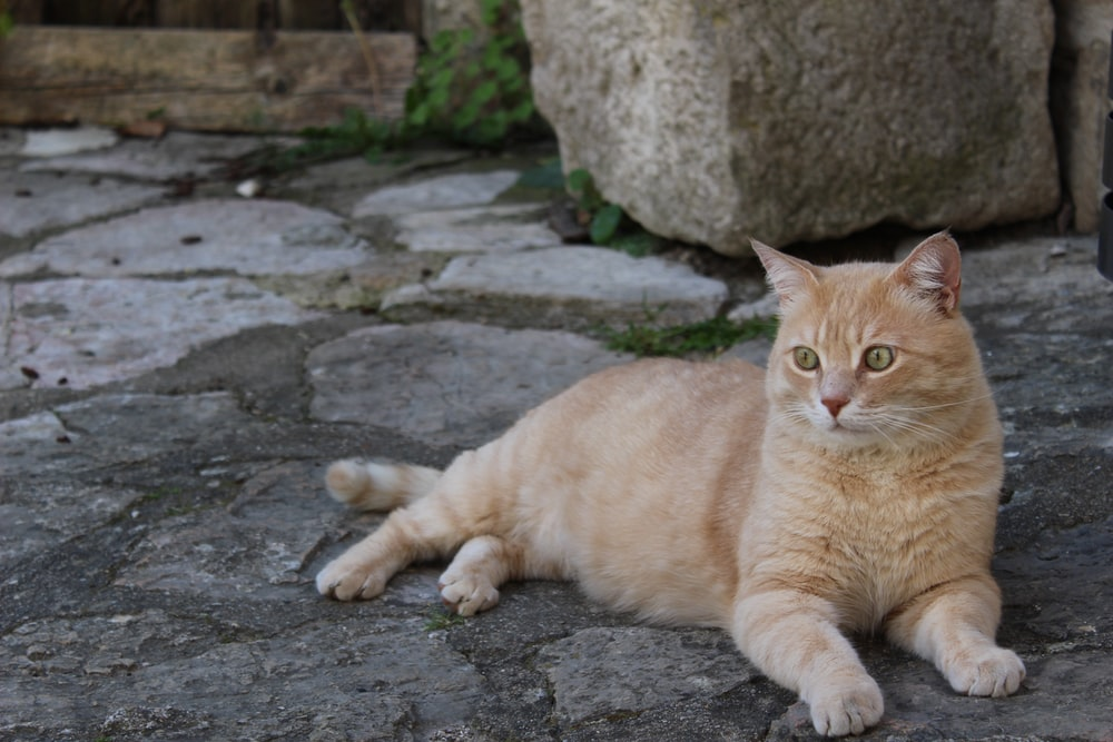 orange tabby cat lying on gray concrete floor