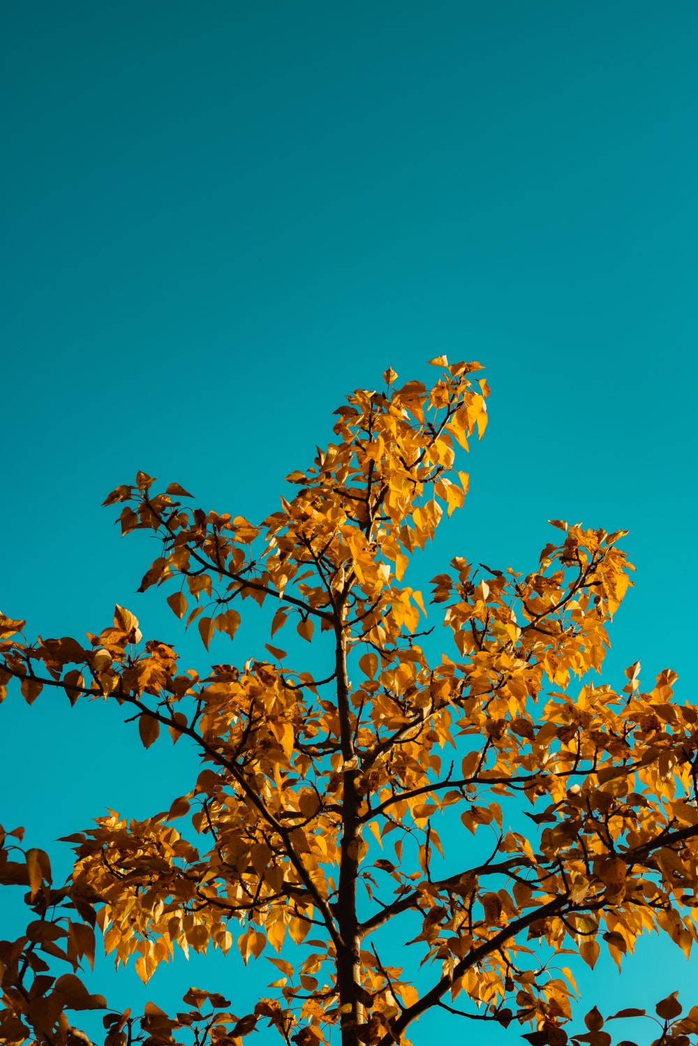 brown leaves on brown tree branch under blue sky during daytime