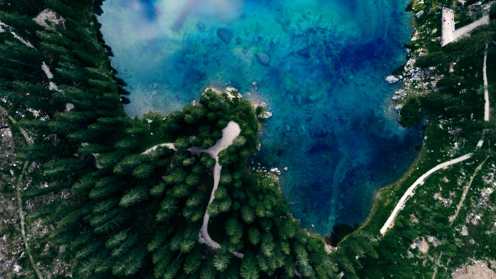 green pine trees under blue sky