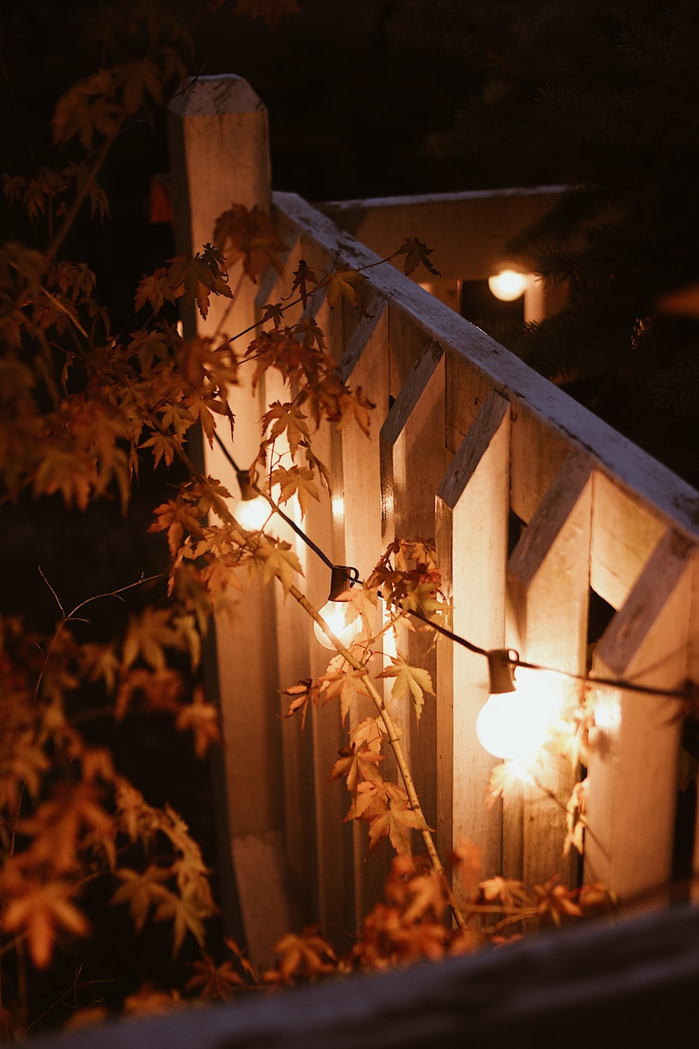 brown leaves on brown wooden fence during night time