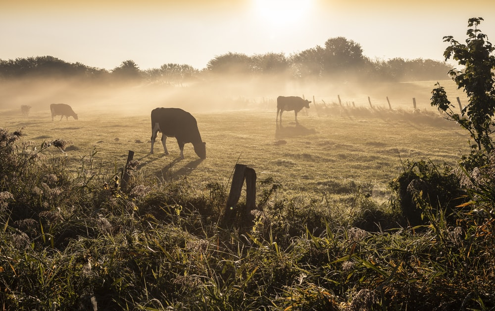 silhouette of horse on grass field during daytime