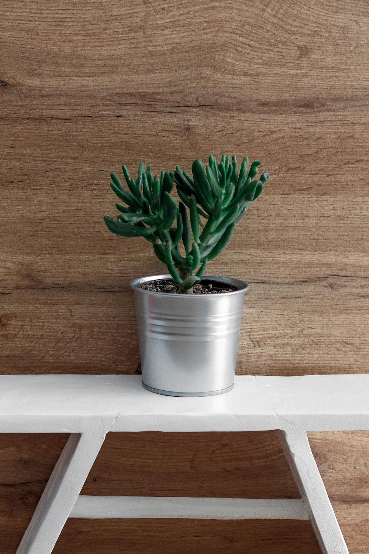 green plant on gray pot