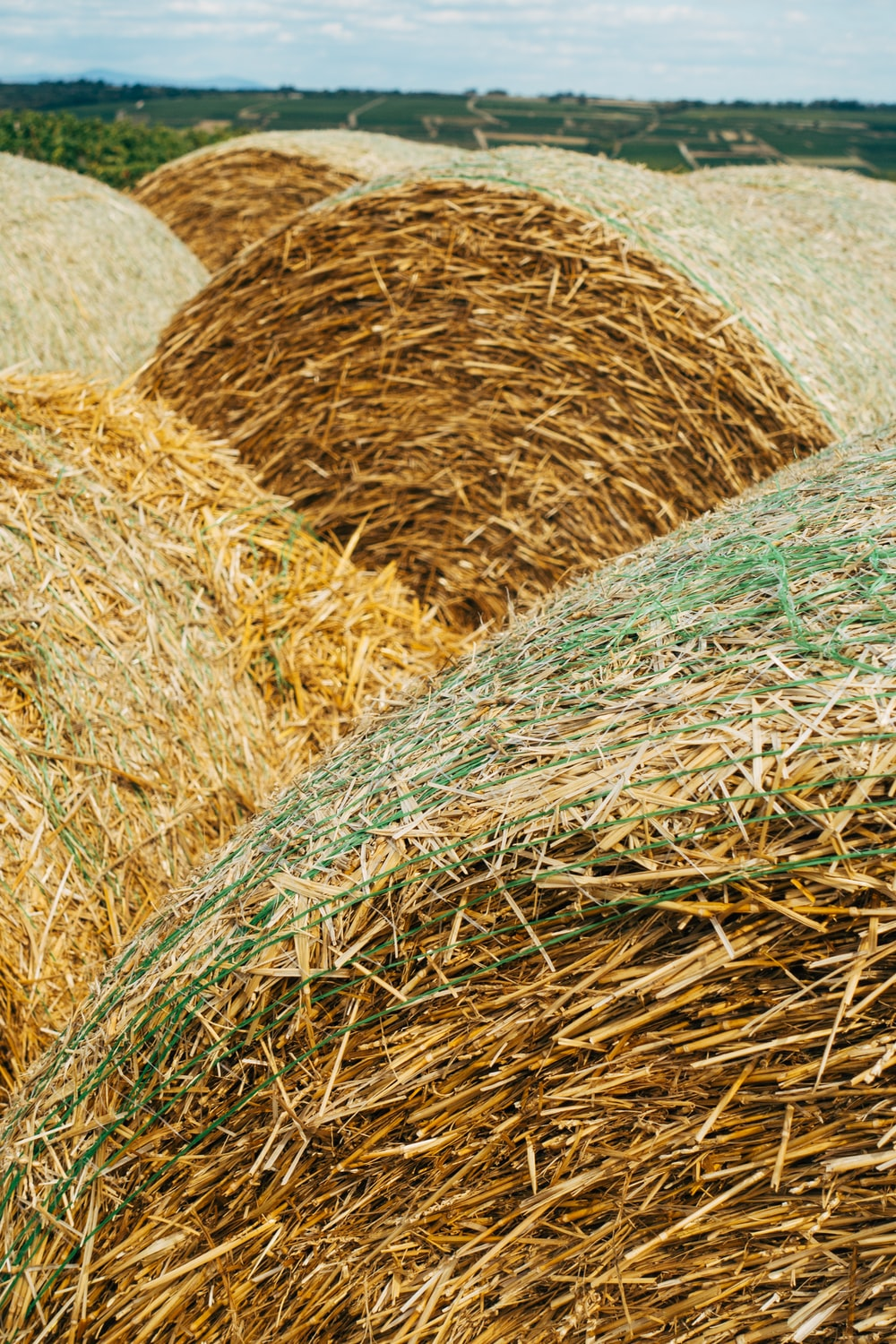 brown hay roll on white textile