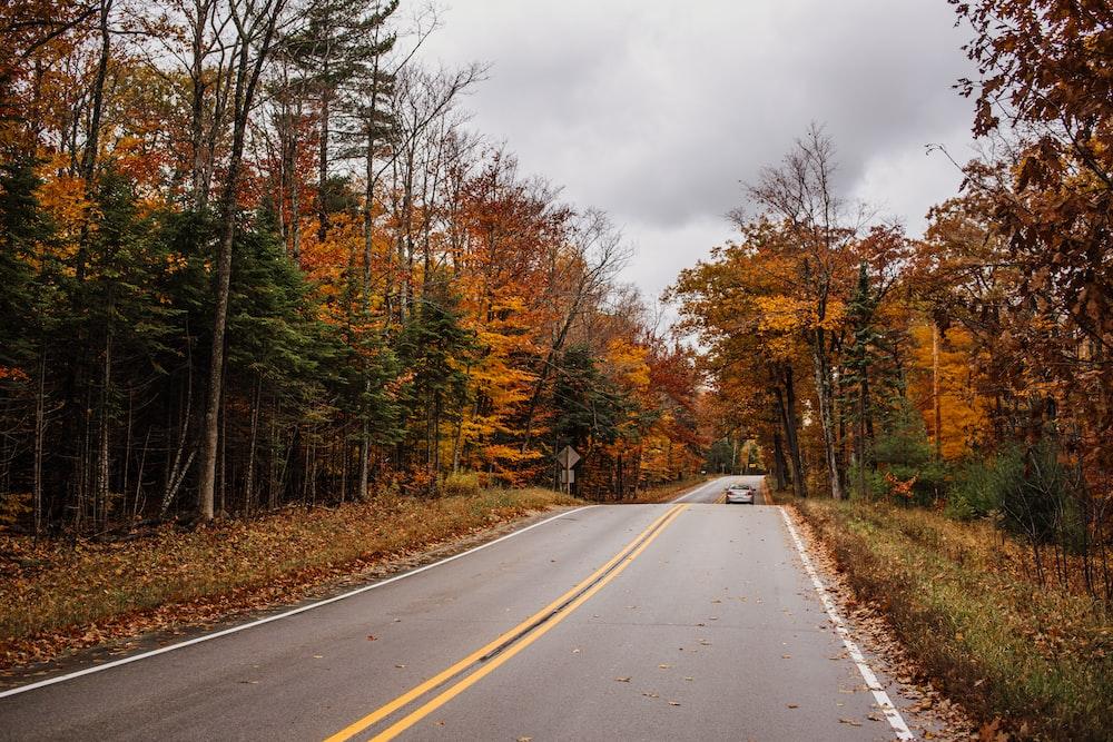 gray asphalt road between brown trees under gray sky