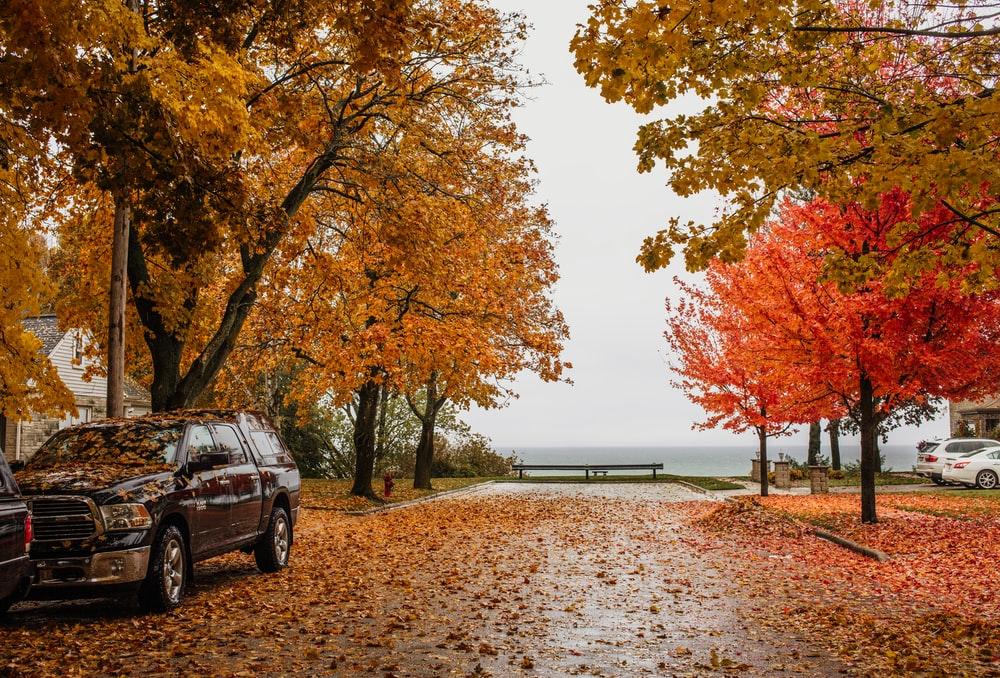 black suv parked near brown trees during daytime