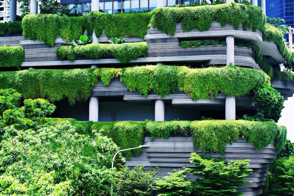 green plants on white concrete fence
