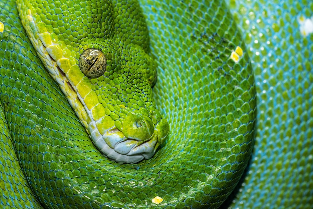 green and white snake on black background