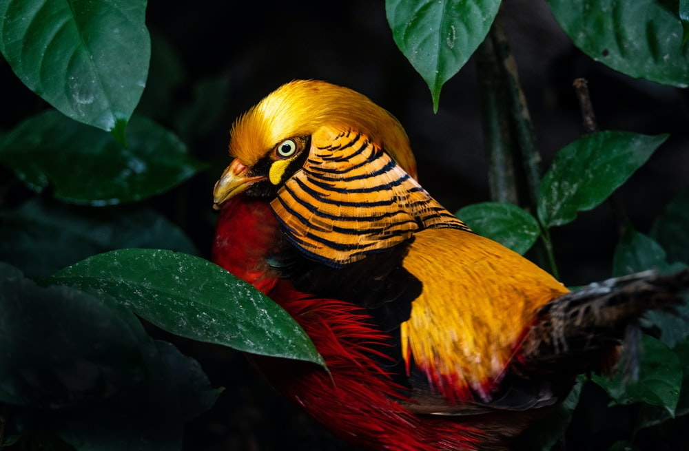 yellow red and black bird on green leaves