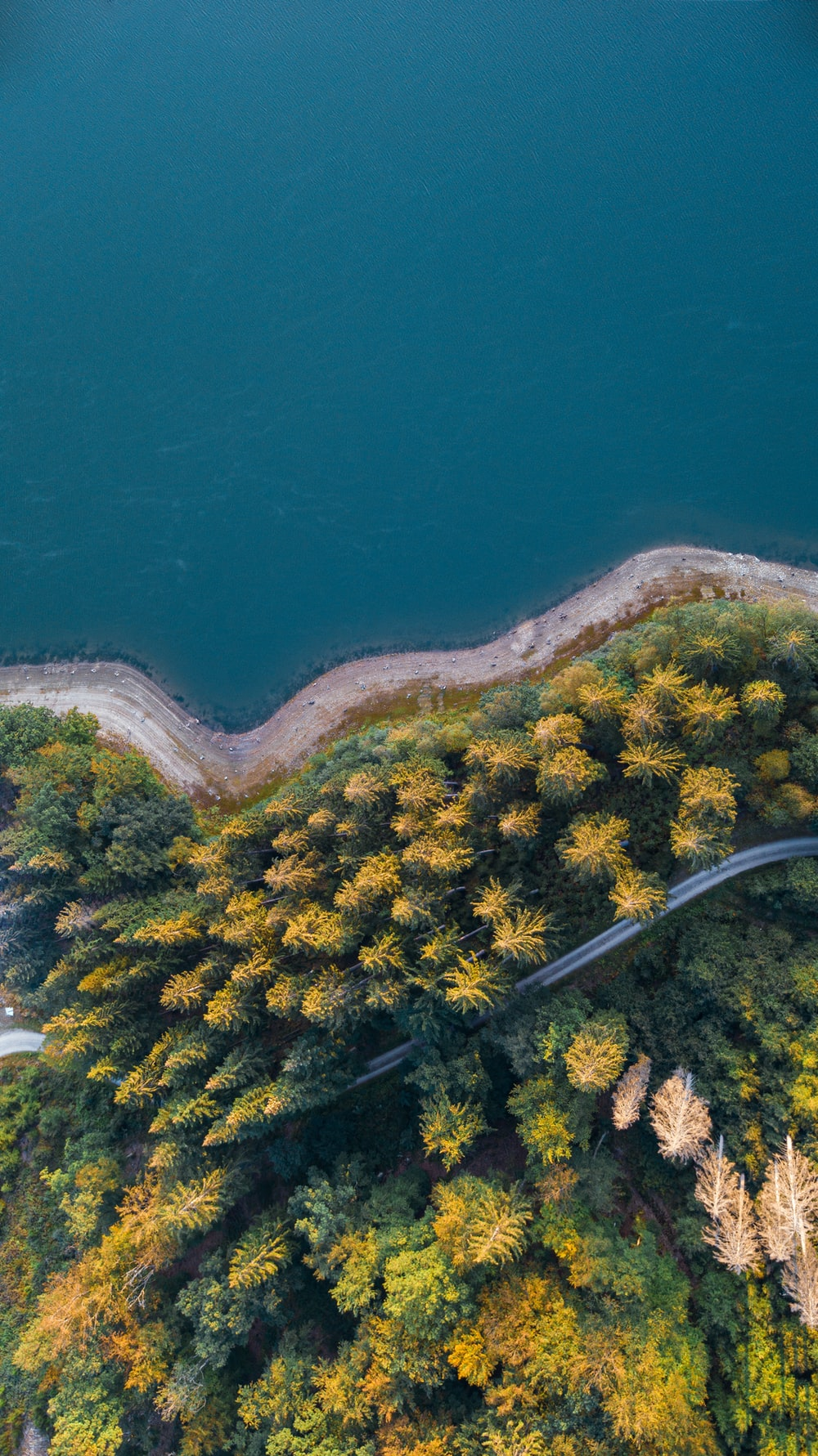 aerial view of green trees and blue sea during daytime